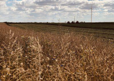Filmy i zdjęcia dla rolnictwa